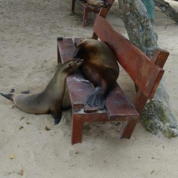 Post PCT Adventures Part III – Living La Vida Lujoso (Galapagos Style)