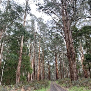 Daylesford to Nolan Creek – Great Dividing Trail