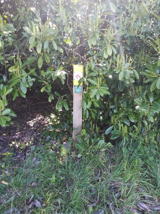 A sign post for the Great Dividing Trail, surround by bushes.